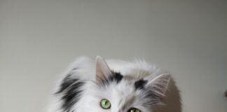 Jak zrobić drapak dla kota?