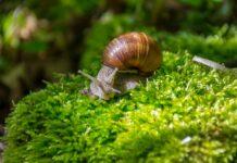 Czego nie lubią ślimaki w ogrodzie?